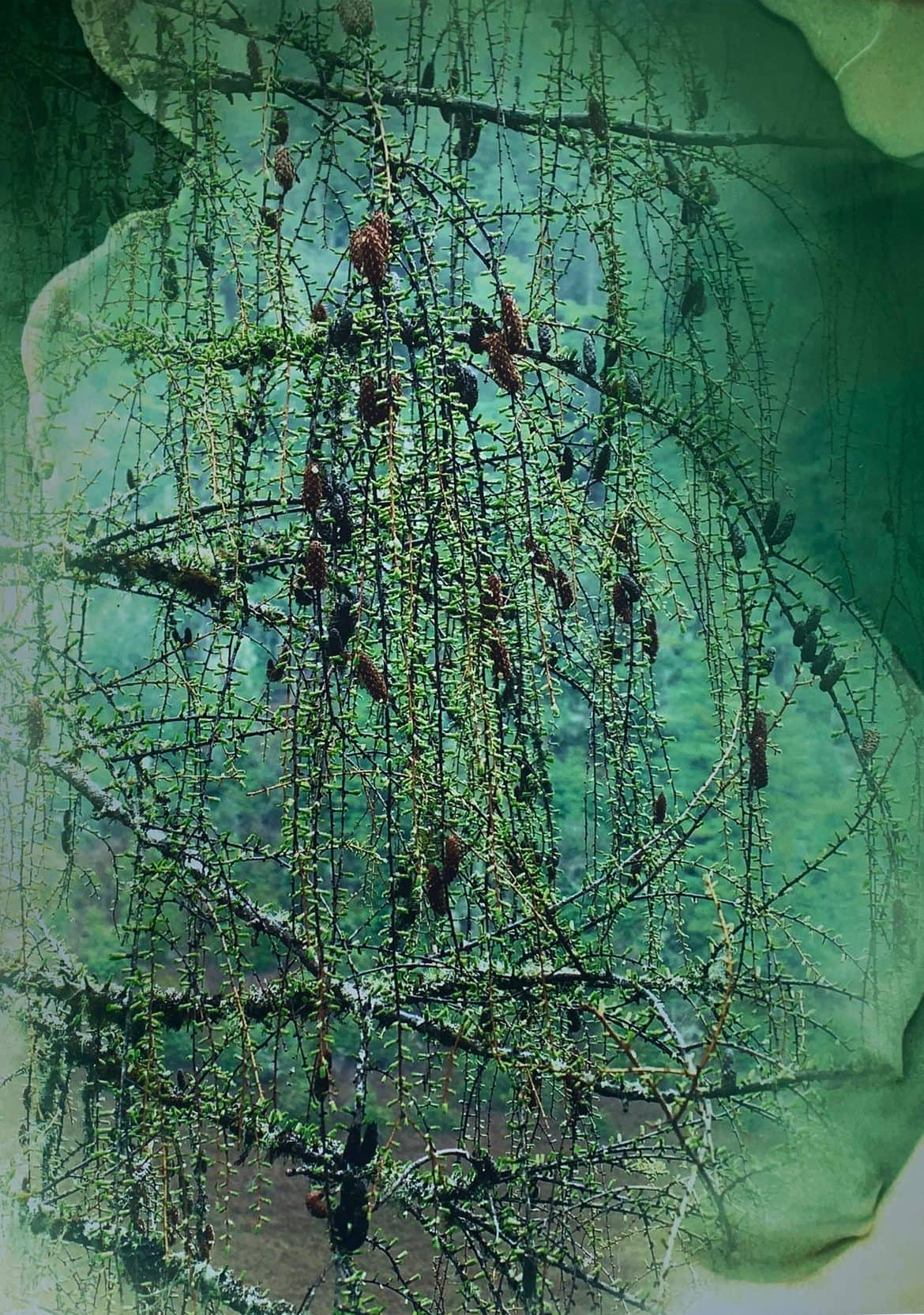 Janet Laurence, 'Entangled Garden for Plant Memory 1', 2020, dye sublimation archival print onto polished mirror, 120 x 80 cm, edition of 3 + 1AP