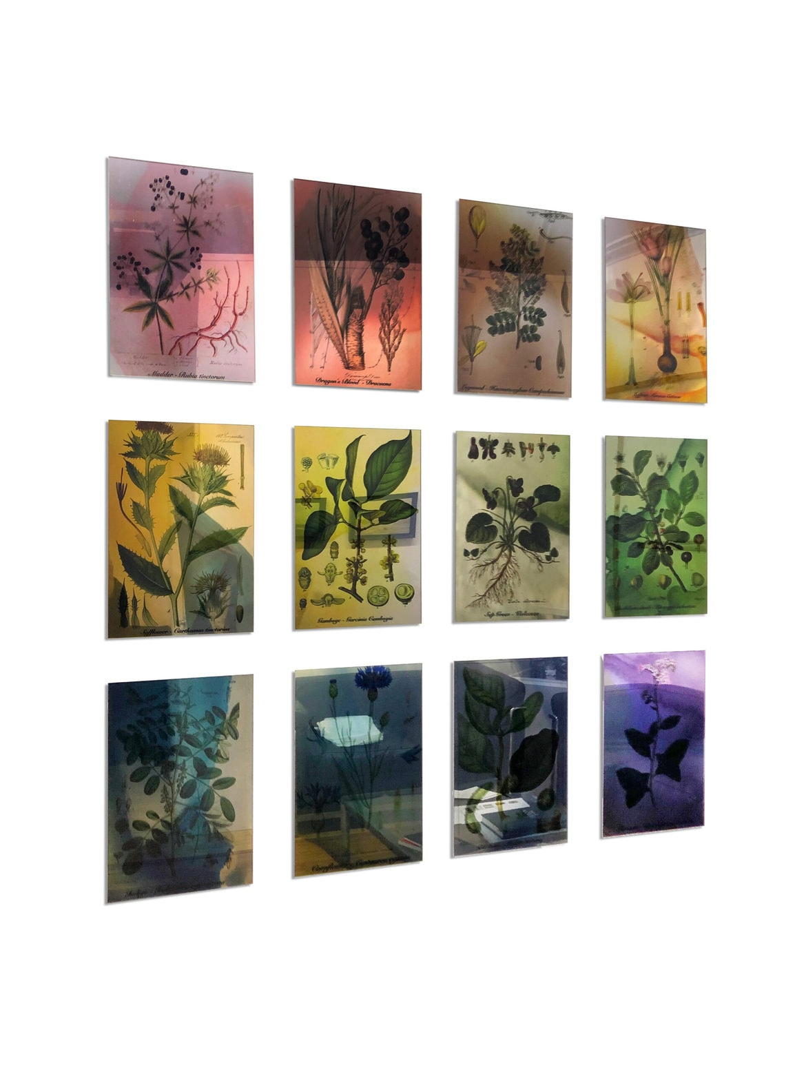 'Plants Bleed Lakes', 2020, duraclear on mirror, 12 panels, 29 x 19 cm each, 97 x 93 cm overall, edition of 3 + 1AP