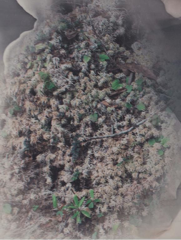 'Foresting #1 (Bhutan)', 2017, Duraclear on mirror, 27.5 x 20 cm, unique