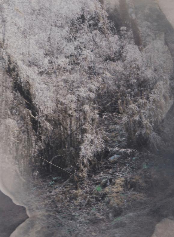 'Foresting #2 (Bhutan)', 2017, Duraclear on mirror, 27.5 x 20 cm, unique