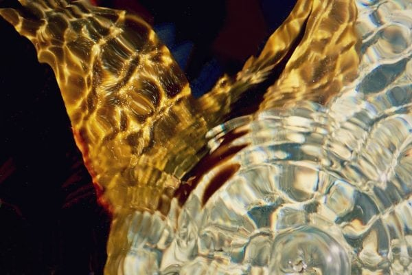 Dominik Mersch Gallery, Julia Champtaloup, Souvenirs for the future,'Ripple kelp blur', 2019, photographic print