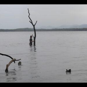 Lottie Consalvo, 'The Last Arborist', 2020, single channel video, 02:49 mins, edition of 5 +1